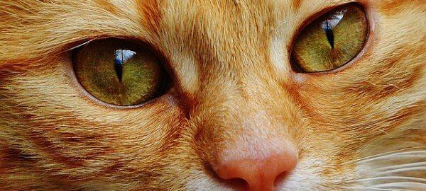 cat 1334970 640 600x270