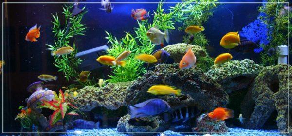 aquarium fen
