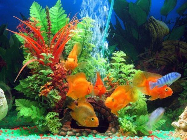 dezinfekcija akvariuma 67 1