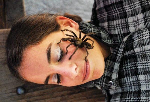 pauk na lice u devushki