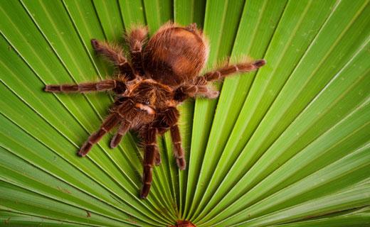 Приснился паук, что это может значить