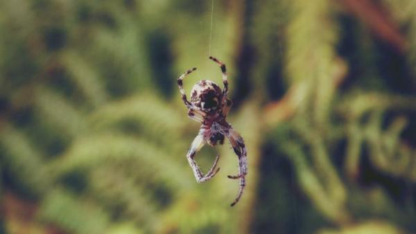 Картинки по запросу Народные приметы: паук