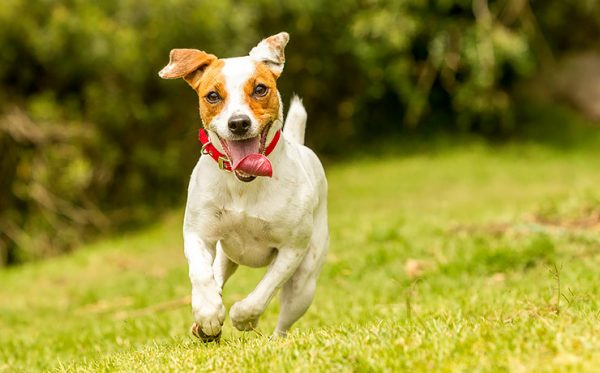 Хаски или алабай: какая ты собака по знаку зодиака? | Журнал ...