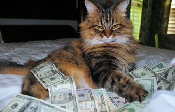 5 известных котов, ставших миллионерами