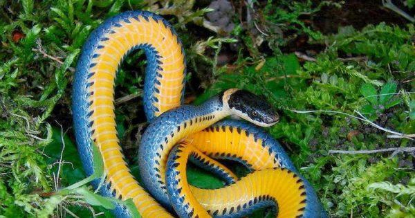 Змеи - красивые картинки (40 фото)